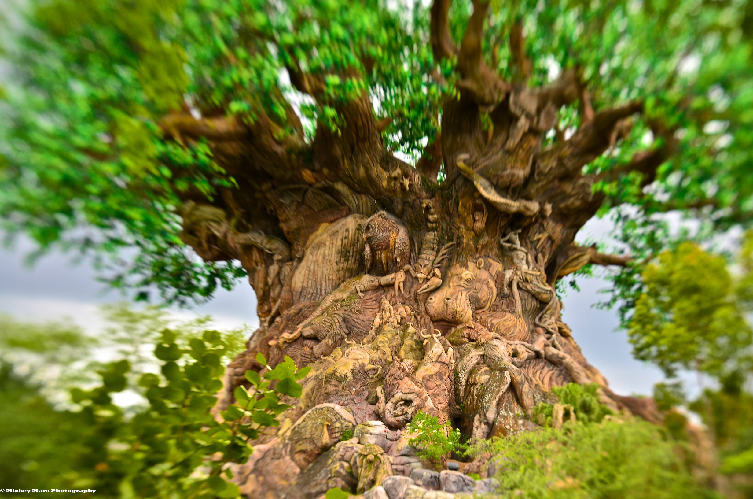 Tree of Life with Lens Baby for web